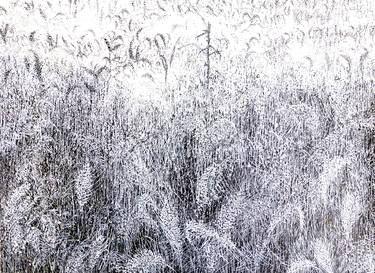 "Saatchi Art Artist Maria Westra; Drawing, ""WHEAT"" #art  https://www.youtube.com/watch?v=ksLWULWKoM4"