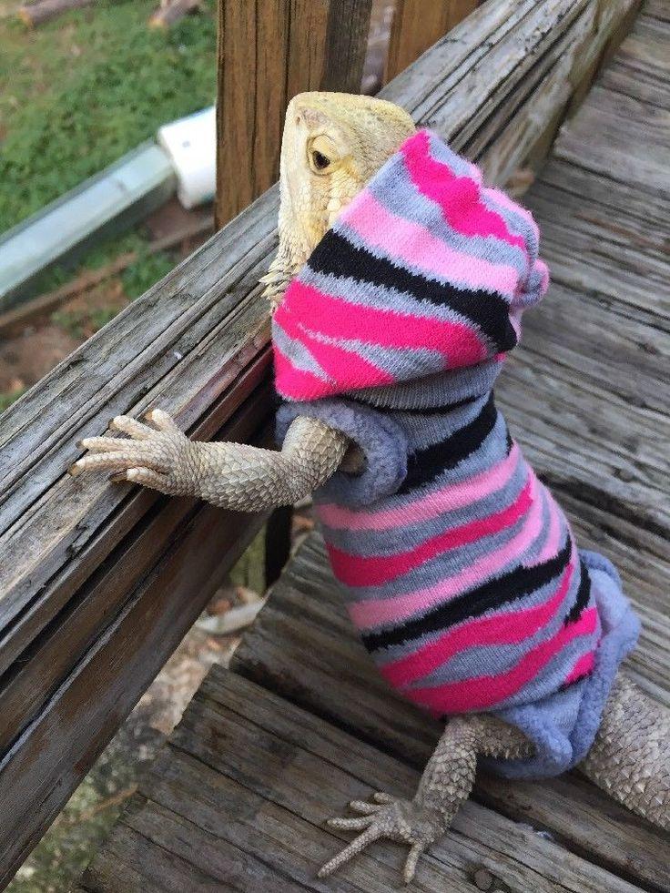 Animal Prints Xlrg Grey Sleeveless Hoody Body Shirt 4 Female Bearded Dragon Bearded Dragon