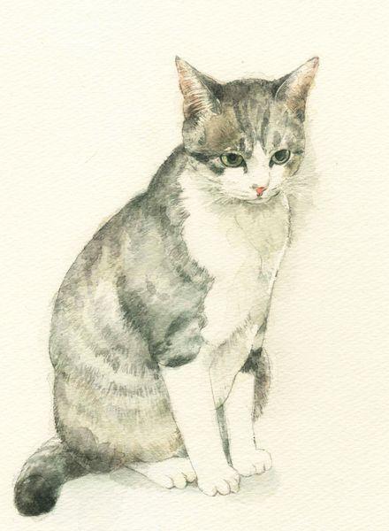 midoriyamadadays:  私の猫