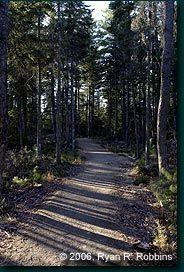 Bangor City Forest: Trails
