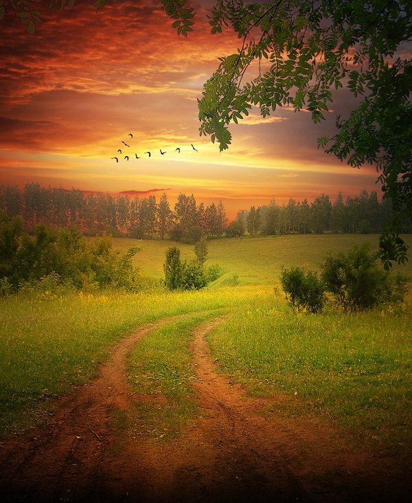 A grass field, dirt road, sunset and birds in V formation