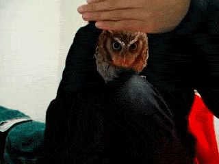 17 Reasons We Know The Owls Are Up To Something - literally LOL-ing