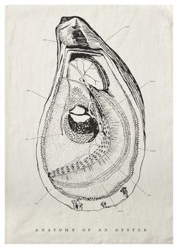 Oyster Anatomy Tea Towel, Set of 4 - transitional - Dishtowels - Step. & Lizzie  Tea towel, but I like the pen and ink style!
