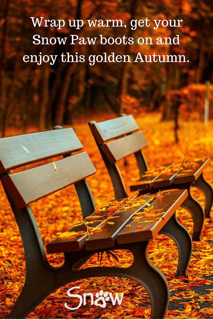 Gorgeous Autumnal colours.