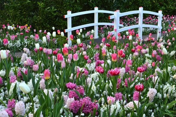 Keukenhof Gardens DutchGrown