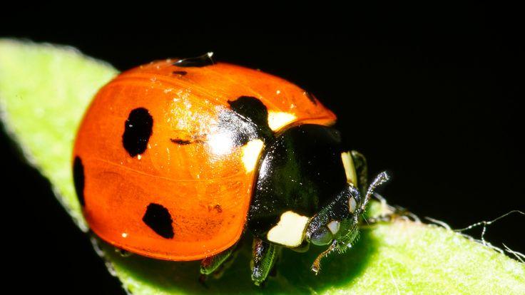 ladybug 2 - ladybug
