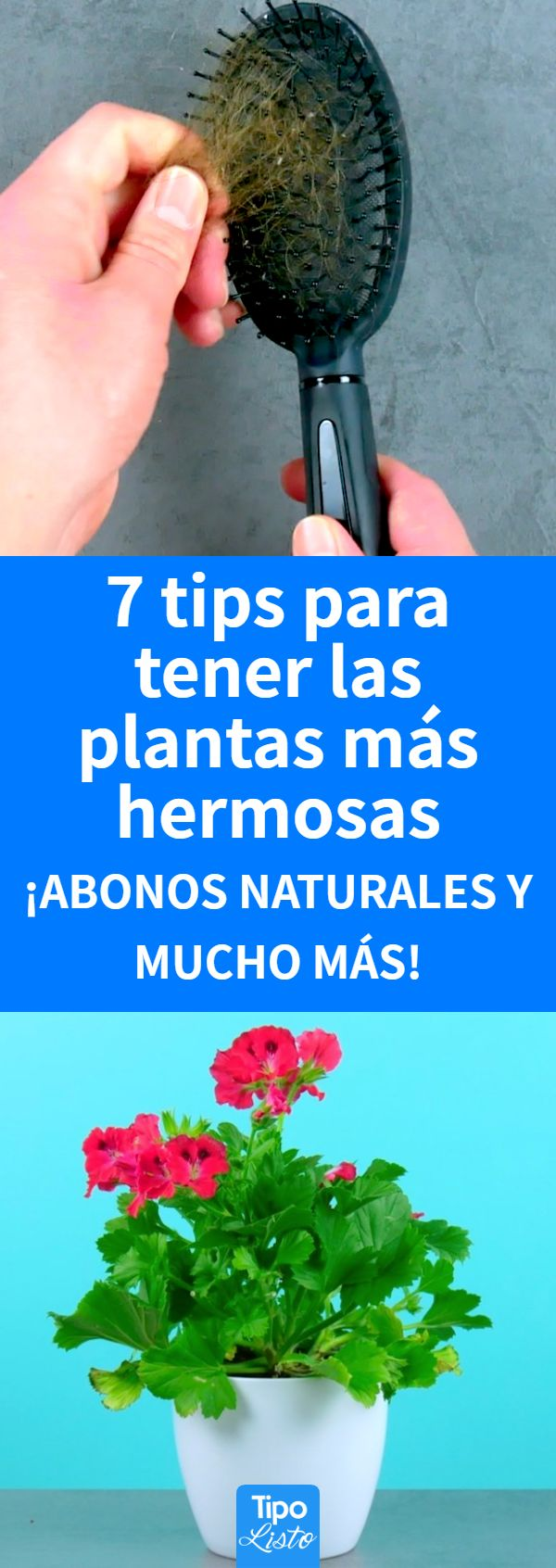 House Plants Decor, Plant Decor, Things To Fo, Mystic Garden, Pitaya, Plant Care, Indoor Plants, Gardening Tips, Cactus