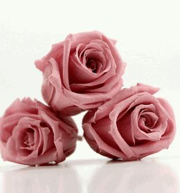 """Preserved Roses Cherry Blossom Pink Roseheads 1.5"""" (12 roses) must hav ethese colors roses, i love this color"""
