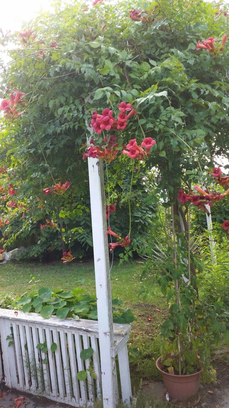 Lieblingsbaum Garten