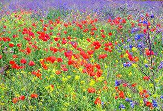 Del erial al jardín frondoso de la fe
