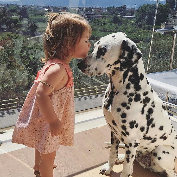 Dogs and babies just go together
