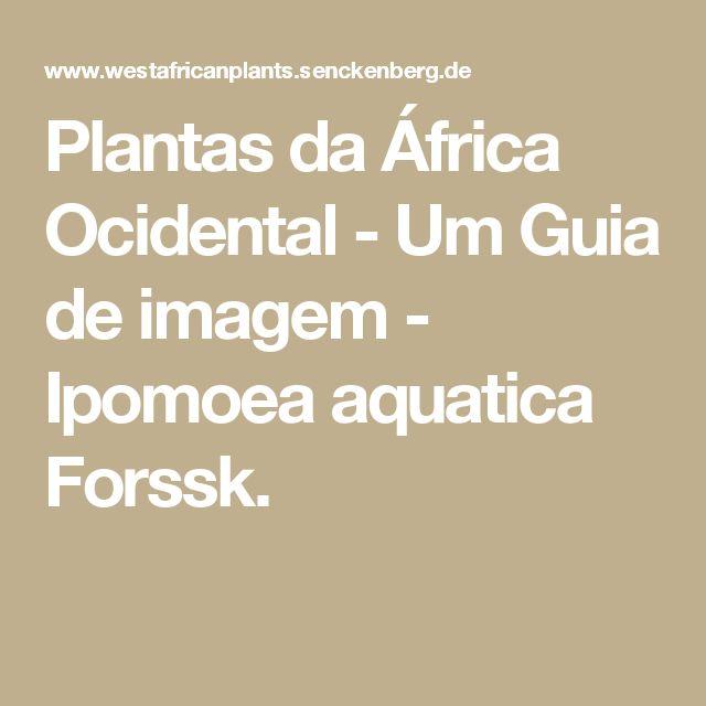 Plantas da África Ocidental - Um Guia de imagem - Ipomoea aquatica Forssk.