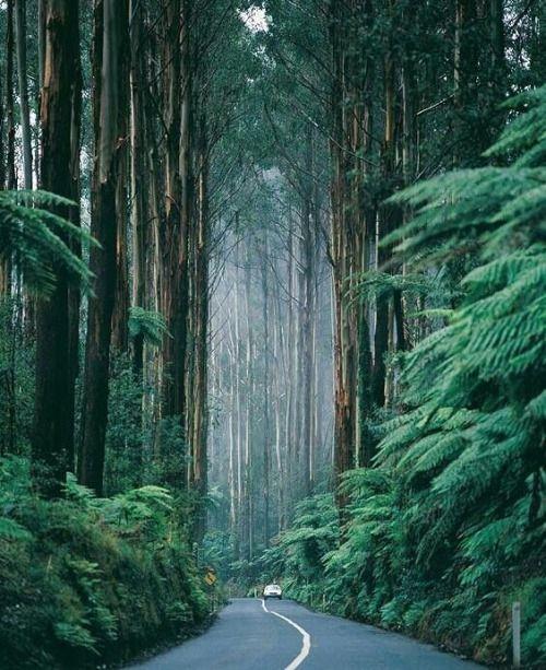 Black Spur Drive in Victoria, Australia.