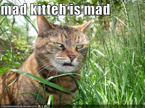 very: Angry Animal, Mad Kitteh
