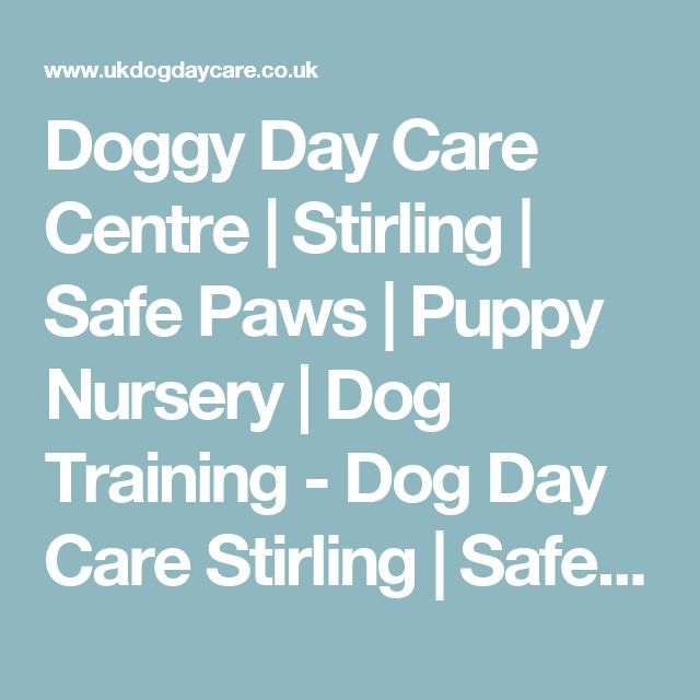 Doggy Day Care Centre | Stirling | Safe Paws | Puppy Nursery | Dog Training - Dog Day Care Stirling | Safe Paws