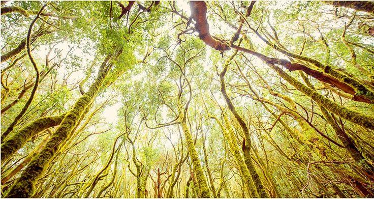 forest Garajonay-6 gomera