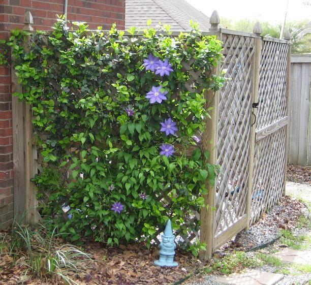landscape fencing for vines Shower Fresh Garden H.F