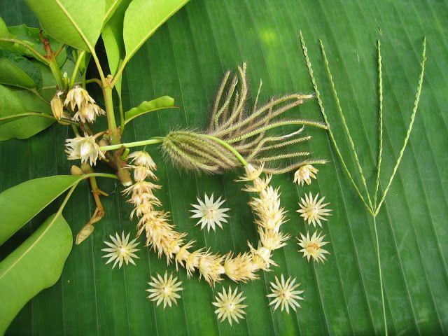 "Mimusops elengi (strung into a lei laid on banana leaf) the ""Bakula Tree"" is sacred to the Vedic Nakshatra Anuradha (17 of 27)"
