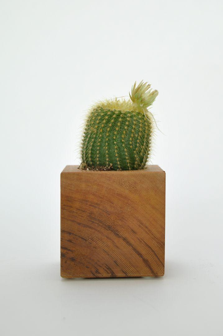 Cube Succulent Planter from Koromiko via The Third Row