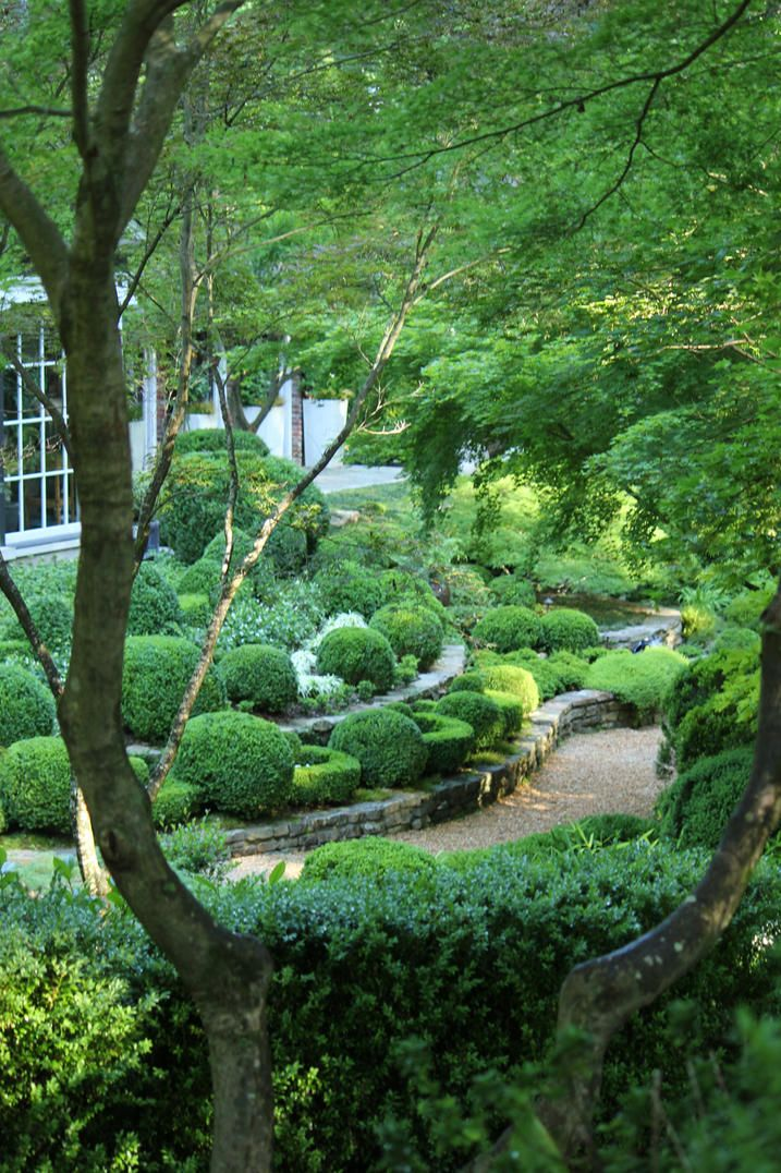 A beautiful, shady, boxwood garden that is always green - uses Buxus sempervirens 'Suffruiticosa', Buxus microphylia 'Green Pillow' and 'Kingsville Dwarf' because they are slow growing, dense, and easy to prune