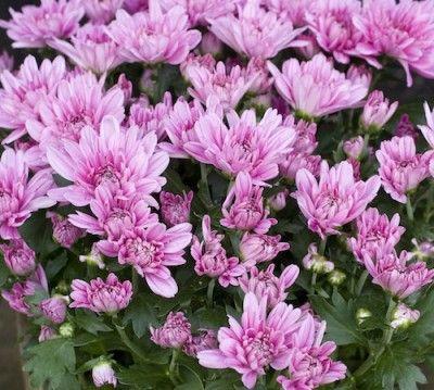 Rensa luften i ditt hem! Här är 6 växter som gör jobbet!
