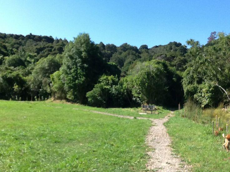 Horoeka Track Stokes Valley New Zealand 2014