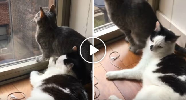 Gato Tenta Ser Carinhoso Mas Descobre Que Tem Um Amigo Ingrato