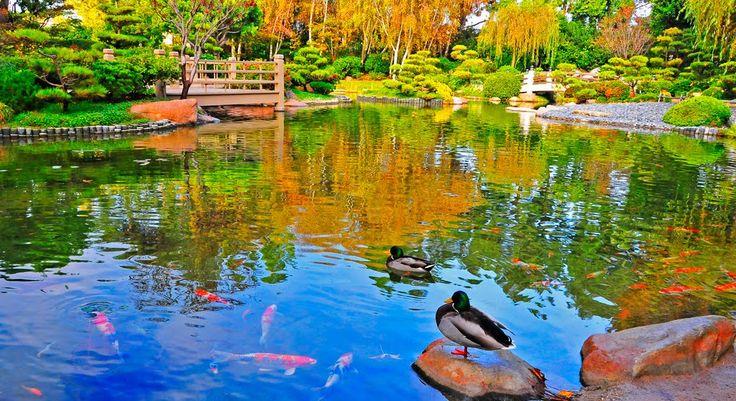 Deze gigantische koivijver is in Japanse stijl. De tuin bevat prachtige kleuren en is zeer natuurlijk opgebouwd. Kijk op TuinTuin.nl voor talloze foto's van (koi)vijvers.