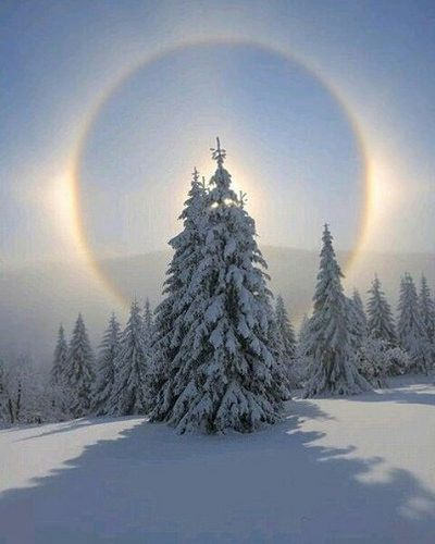 #sun #sunhalo #halo #morning #winter #forest #wood #snow #frost #nature