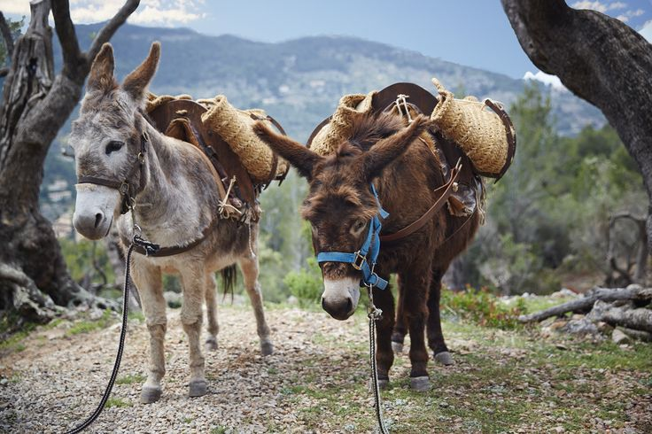Our much-loved donkeys will accompany you on a tour through the hotel's olive groves. Admire the tranquil landscape before stopping for an unforgettable picnic lunch in a stone shepherd's hut.