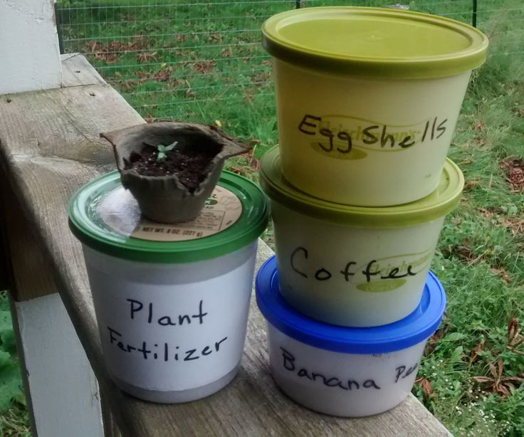 Make Your Own Organic Plant Fertilizer For FREE