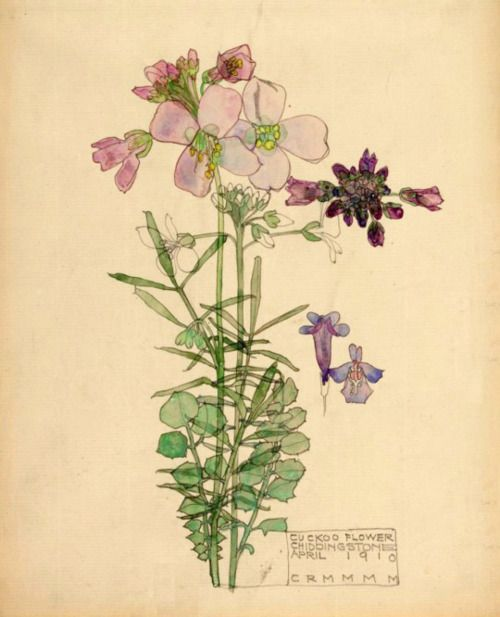 Cuckoo flower ~ Charles Rennie Mackintosh 1910