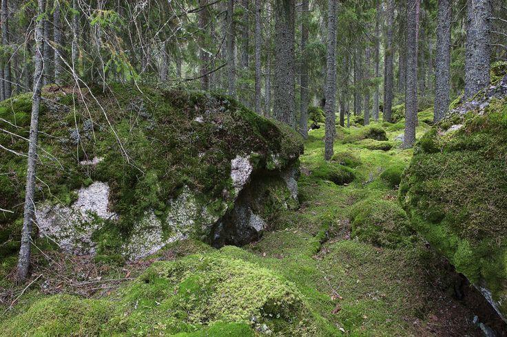 Forest - Fototapeter & Tapeter - Photowall