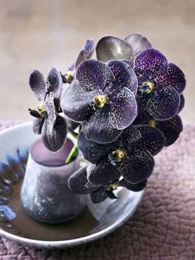 Die besten 17 ideen zu orchideen auf pinterest wachsende for Knetbeton selber mischen