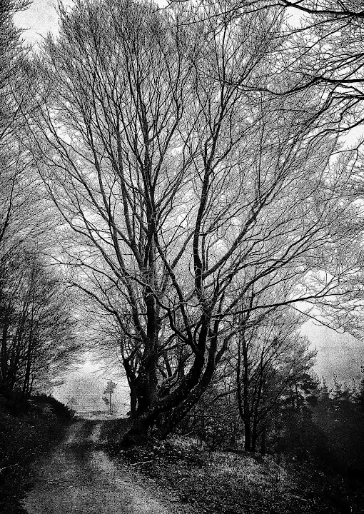 Le grand arbre.  © Copyright Yves Philippe