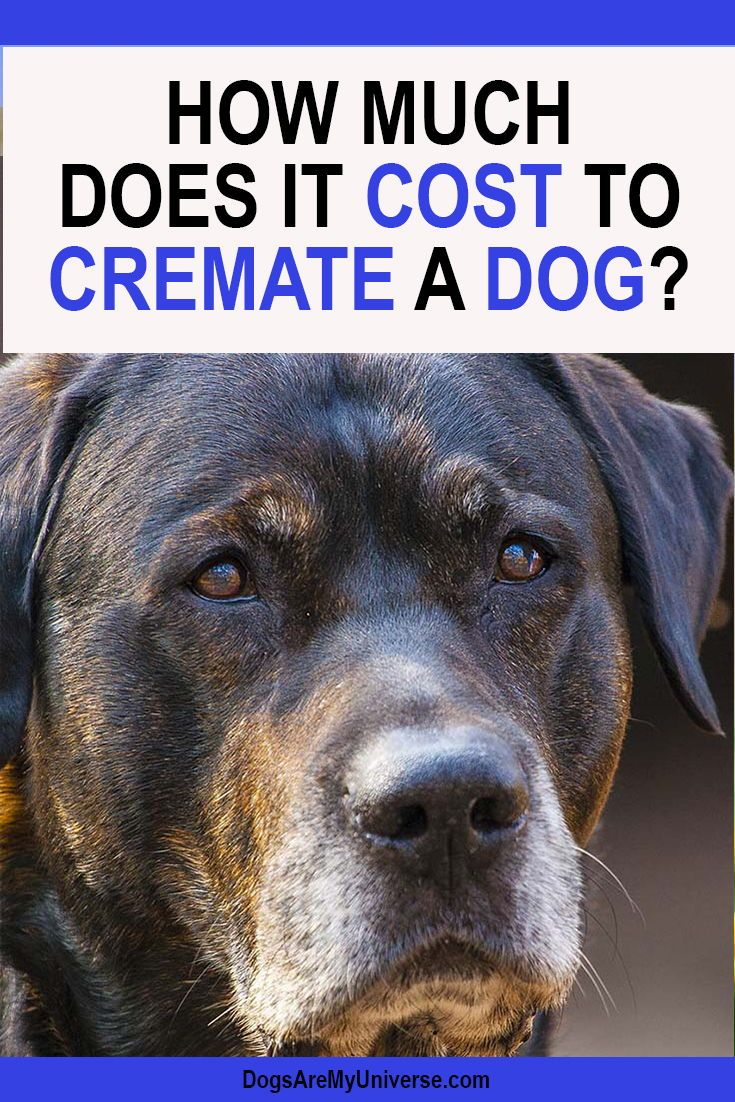 How Much Does It Cost To Cremate A Dog? | Pet health ...