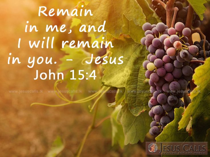 Remain in me, and I will remain in you. - (Jesus) John 15:4