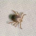 #Get Rid of Ticks, you should paid attention to your shrub border and crawl spaces around your building. Our services are available 24 hours a day or you can leave us a phone message or send us an email any time. We warranty our results and look onward to working with you. More Info: http://www.critterandpestdefense.com/services/tick-control/