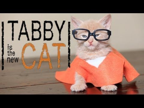 "Petflix presents ""Tabby Is The New Cat"" for your viewing pleaspurrr. 