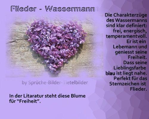 Wassermann - Flieder