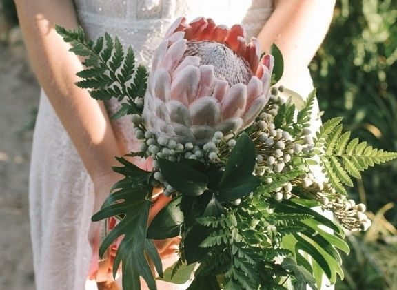 Proteas perfect for Fynbos Weddings DNA photography