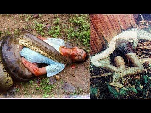 Serpent Eater - Serpent Eater