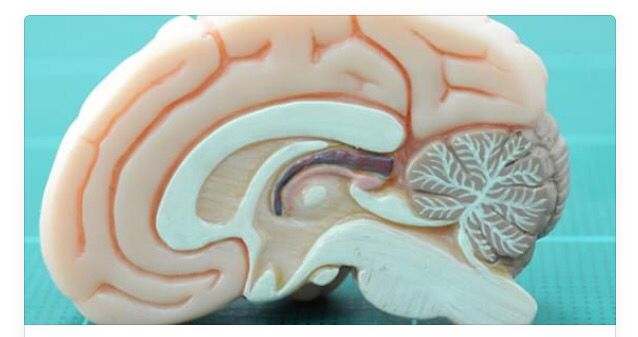 Fetal alcohol exposure results in permanent fragmentation in slow-wave sleep