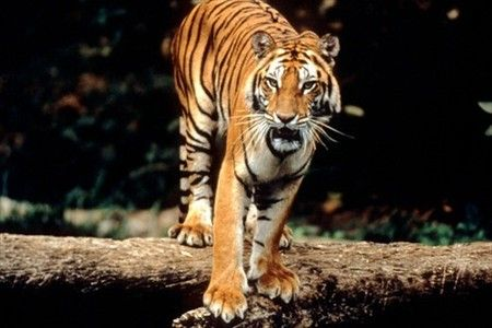 Are you Looking for Orissa Wildlife Tours? Tourism Orissa is one of the Leading Tour Operators in Orissa provides Best Orissa Wildlife Tour Packages ever.
