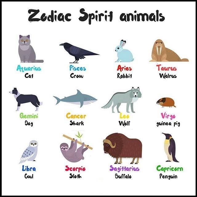 Aquarius Animal Spirit My favorite animal is ...