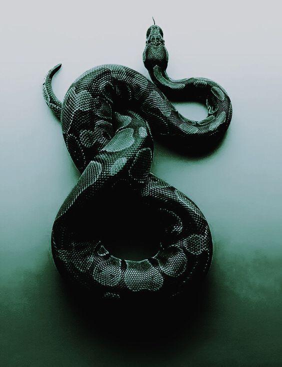 внимание, насколько картинки тумблер змеи все время