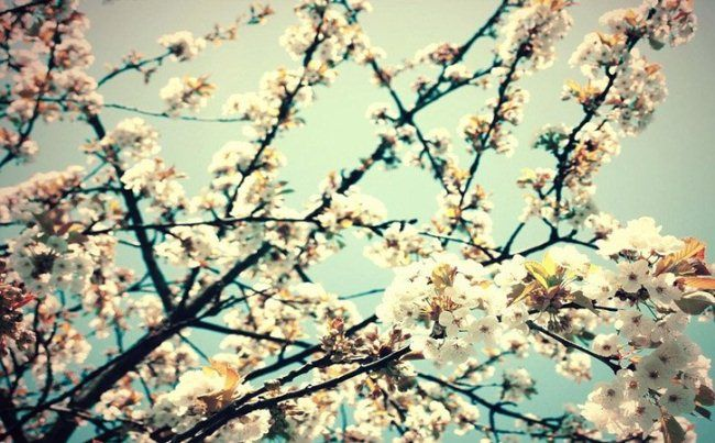 Check outthis free spring wallpapers that illustrate the prettiness of springtime