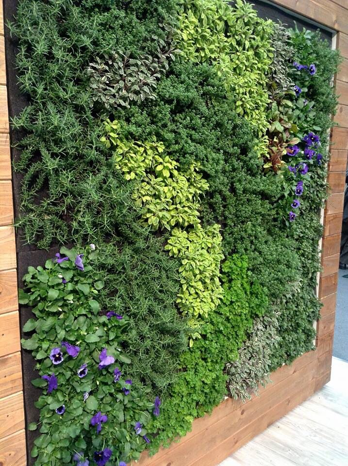 great example for a edible living wall vertical gardening