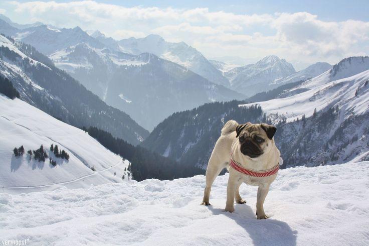 Urlaub mit Hund: 9 Hundeblogger verraten Ihre besten Tipps
