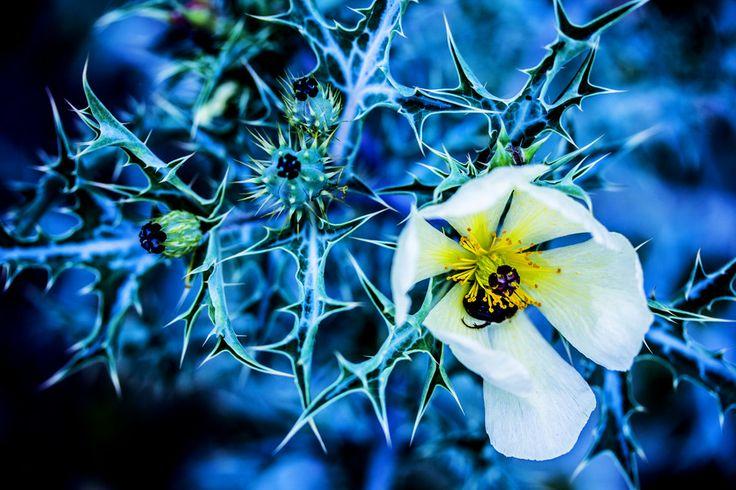 Sleepy bug:) by Andrea Nagel on 500px